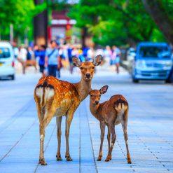 Nara - Kyoto